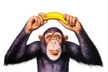 Chimpanzee Holding Banana Hand...