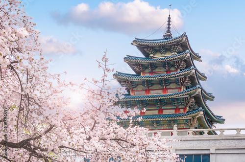 Photo sur Aluminium Seoul cherry blossom in spring of Gyeongbokgung Palace in seoul,korea.