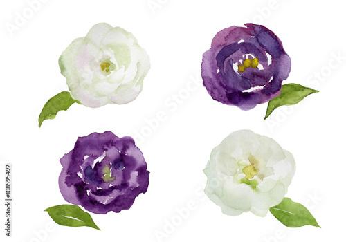 紫と白のトルコキキョウ 水彩イラスト Adobe Stock でこのストック