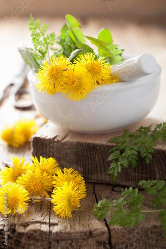 Fényképezés coltsfoot flowers spring herbs in mortar
