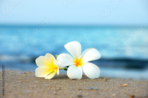 Spoed Foto op Canvas Frangipani two plumeria flowers on the sand on the beach