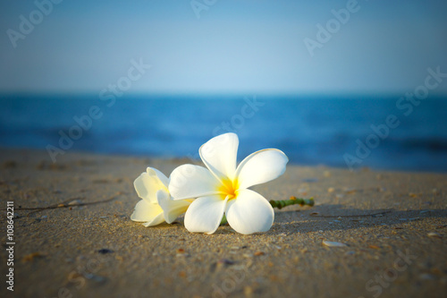 Recess Fitting Plumeria two plumeria flowers on the sand on the beach