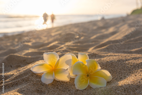 Fotografia  Plumeria flowers on the shore on sunset beach with golden sunlight and couple