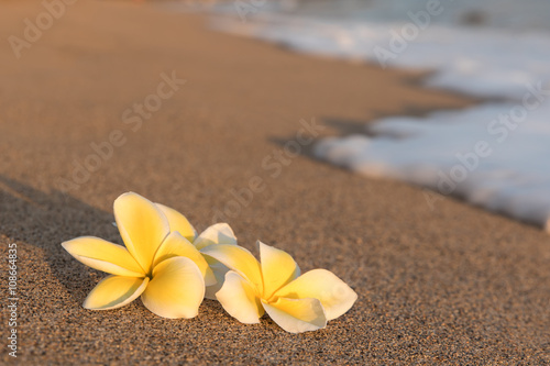 Poster  Plumeria flowers on the shore with foam wave