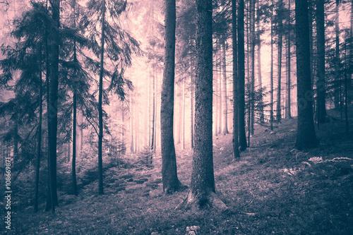 las-iglasty-w-pieknych-kolora