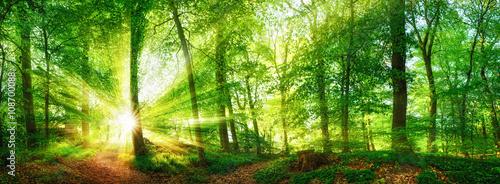 Fotobehang Bossen Wald Panorama mit durch Blätter leuchtenden Sonnenstrahlen