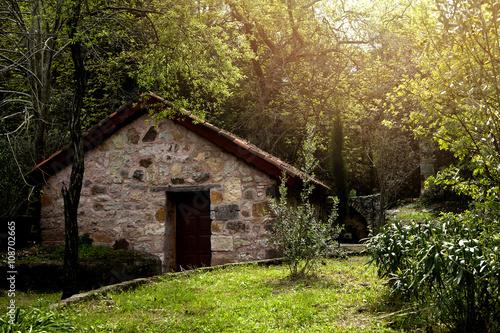 Poster  Orman evi