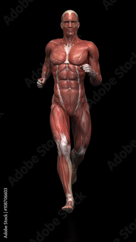 Running Man Muscle Anatomy Buy This Stock Illustration And