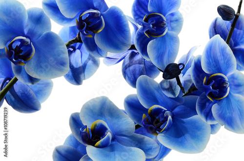 Naklejka na szybę Orchid blue flower