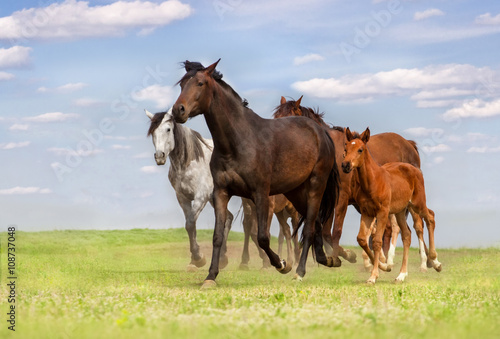 fototapeta na lodówkę Horse herd run on spring pasture against blue sky