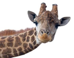 Panel Szklany Żyrafa Giraffe head face