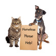 Homeless Dog and Cat With Sign