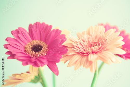 Canvas Print Pink flowers over mint background