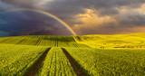 Fototapeta Tęcza - Panorama wiosennego pola