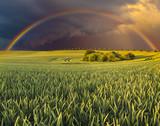 Fototapeta Tęcza - Wielobarwna tęcza nad wiosennym polem