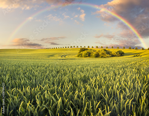 plakat Wielobarwna tęcza nad wiosennym polem