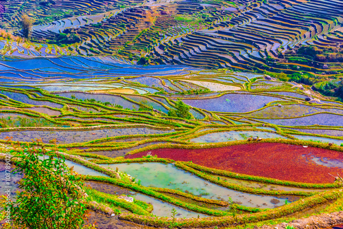 Garden Poster Rice fields Flooded rice fields in South China