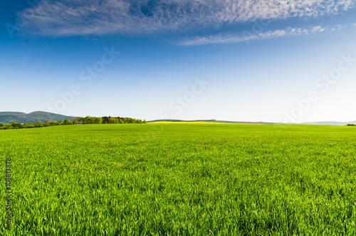 In de dag Weide, Moeras Green field and blue sky
