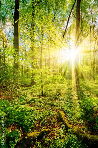 zmierzch-na-haliznie-w-lesie