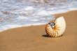 Sea shell on the sandy beach on tropical island