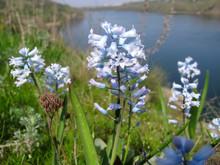 Spring Wildflowers - Hyacinths...
