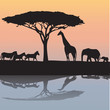 animals of Africa- illustration