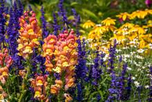 Garden Of Snapdragons, Salvia ...