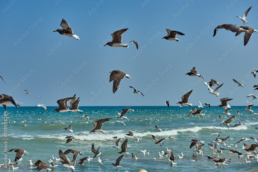 Seagulls flying over the water and floating on the sea