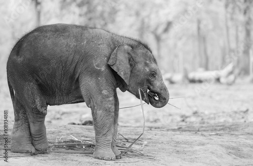 Canvas Prints Elephant Elephant in Nepal