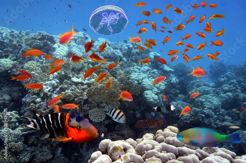 Cadres-photo bureau Tortue Photo of a tropical Fish on a coral reef