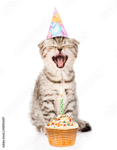 Laughing Cat With Birthday Hat And Cake Isolated On White