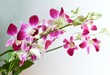 Beautiful Purple Streaked Orchid Flowers or Phalaenopsis