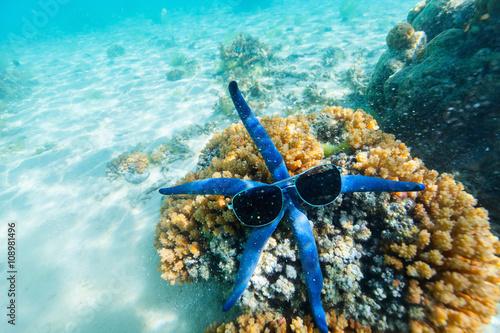 Photo  Blue starfish at reef