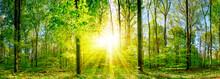 Lichtung Im Wald Bei Sonnenunt...