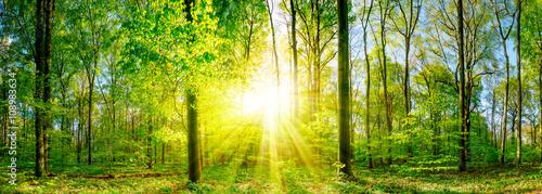 Lichtung im Wald bei Sonnenuntergang Canvas Print
