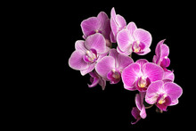 Focus Stacking Photo Of Purple...