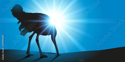Obraz na plátně Autruche - tête dans le sable
