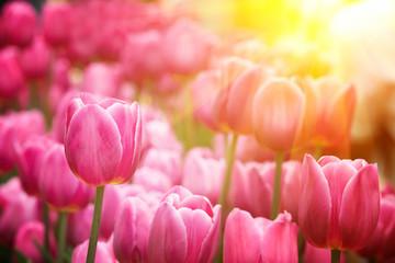 Panel Szklany Tulips