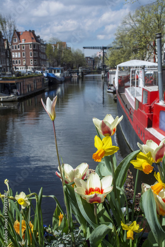 Photo  Several white and yellow flowers on the canal in Amsterdam with boats, buildings