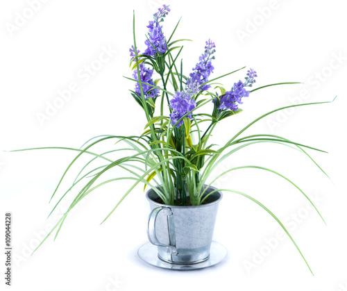 Fototapeta green bush with blue flowers isolated on white background obraz na płótnie
