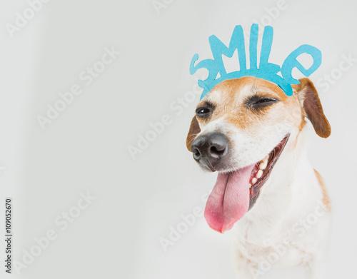 Fototapeta don't worry be happy smiling dog portrait. Motivation emotional pet obraz na płótnie