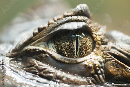 Poster de jardin Crocodile very close up pupil alligator