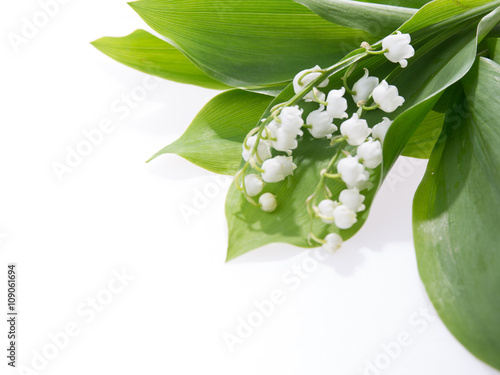 In de dag Lelietje van dalen Lily of the valley isolated on white background