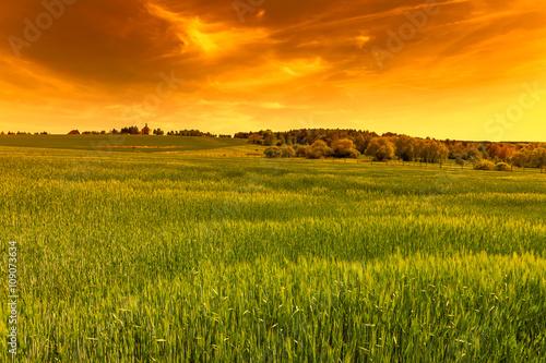 Foto auf AluDibond Beige Green field at sunset sky