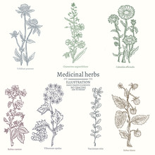 Medical Herbs Collection Of Me...