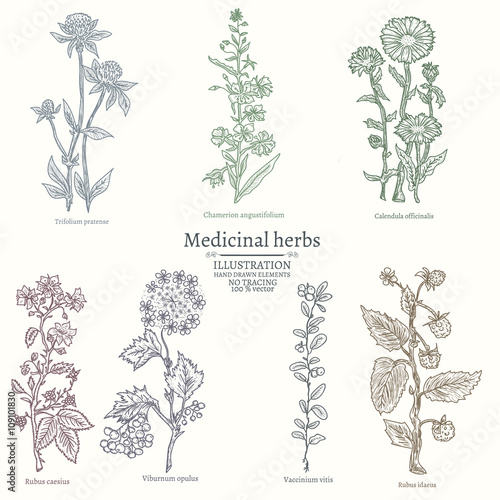 Photo  Medical herbs collection of medicinal plants
