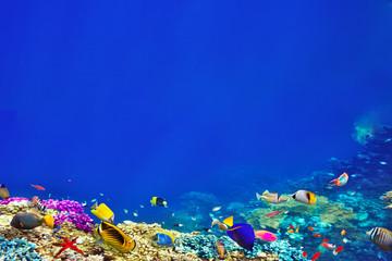 Fototapeta na wymiar Wonderful and beautiful underwater world with corals and tropica