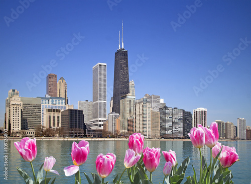 Poster Chicago View of Chicago from the pier with pink tulips on front