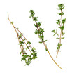 branches of thyme on a white background