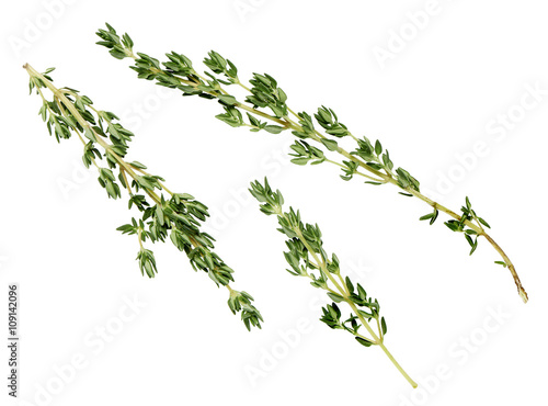 Fotografía  lemon thyme leaves on a white background